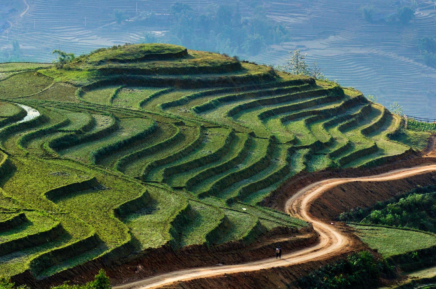 Zwerger-Schoner-Vietnam